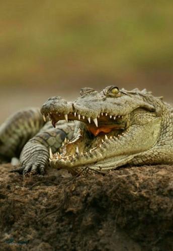 تصویر زمینه حیوانات بامزه