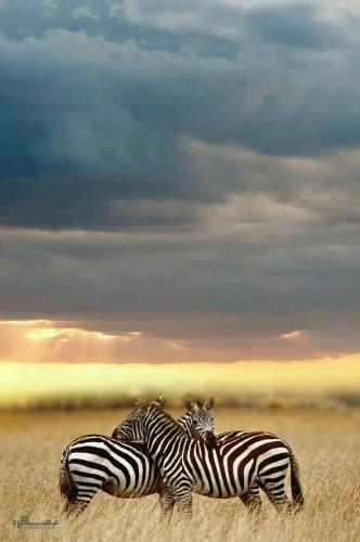 تصویر زمینه حیوانات برای گوشی