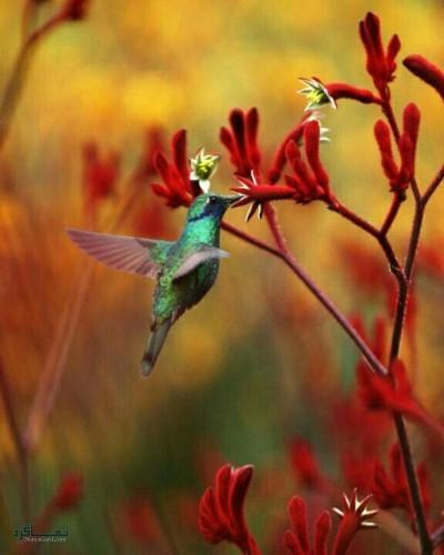 تصویر زمینه حیوانات زیبا