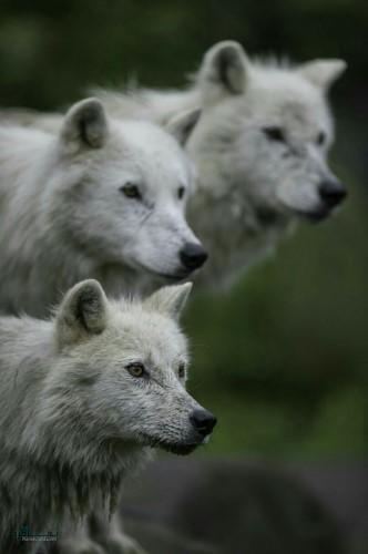 تصویر زمینه حیوانات اچ دی