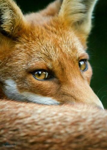 تصویر زمینه حیوانات وحشی برای کامپیوتر