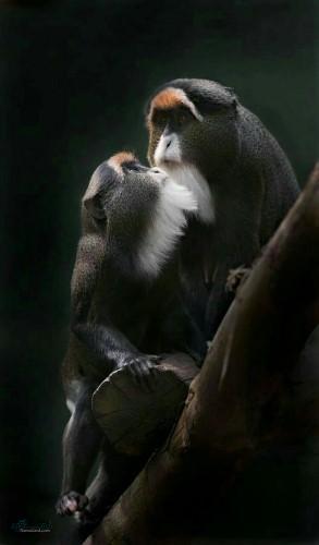 تصویر زمینه حیوانات ناز
