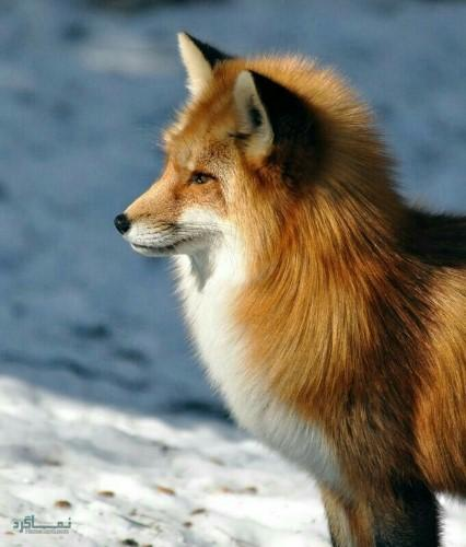 تصویر زمینه حیوانات