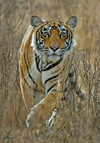 تصویر زمینه حیوانات وحشی