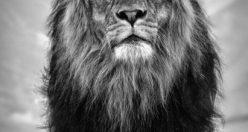 عکس پروفایل شیر سلطان جنگل+ عکس های شیر جذاب (۴)