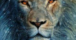 عکس های زیبا شیر سلطان جنگل + عکس های شیر جذاب (۶)