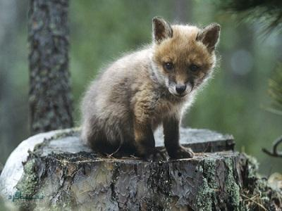 9 تست هوش تصویری حیوانات وحشی - تست 6