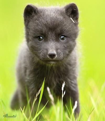 9 تست هوش تصویری حیوانات وحشی - تست 8