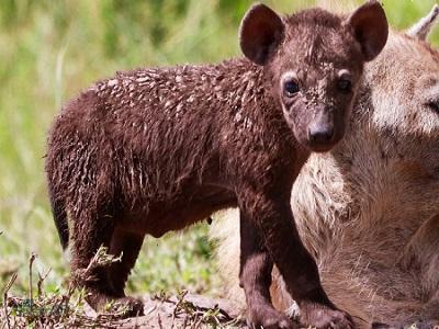 9 تست هوش تصویری حیوانات وحشی - تست 5