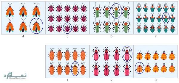 پاسخ 15 تست هوش بینایی سوسک های رنگارنگ (12)